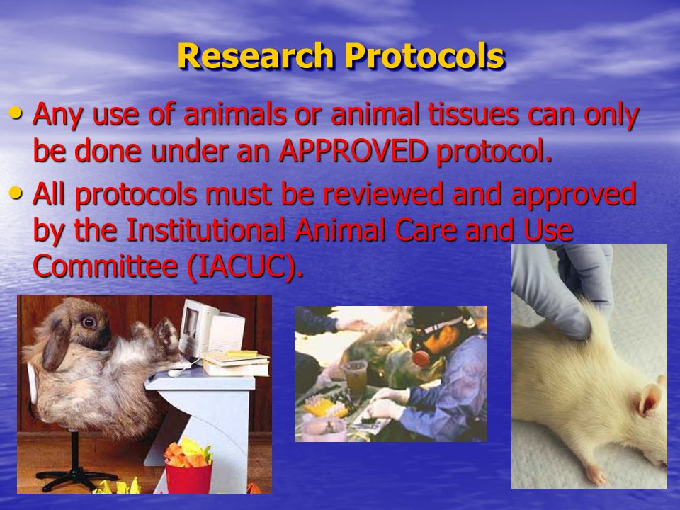 Research Protocols Any use of animals or animal tissues can only be done under an APPROVED protocol.
