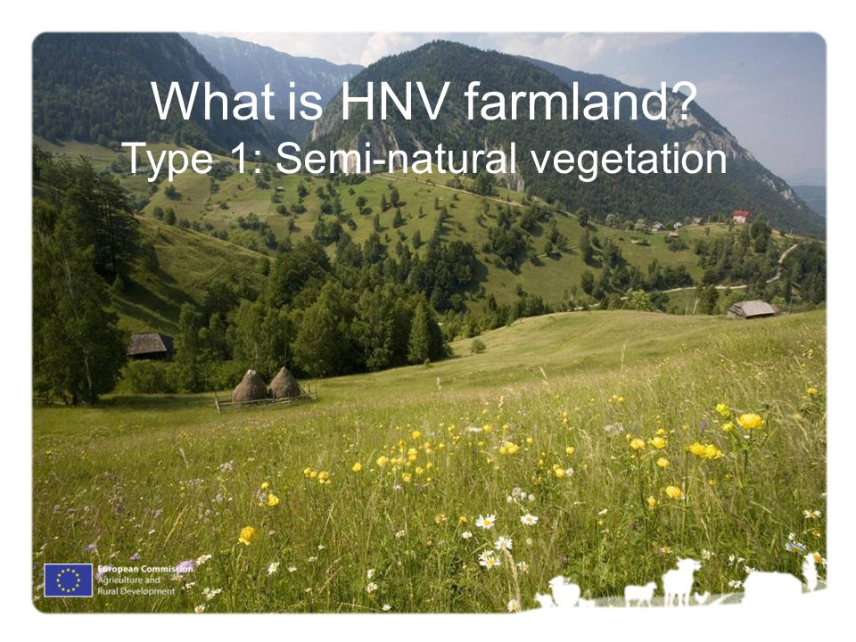What is HNV farmland Type 1: Semi-natural vegetation