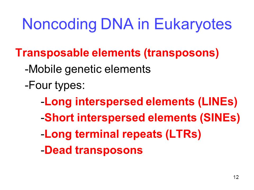 12 Noncoding DNA in Eukaryotes Transposable elements (transposons) -Mobile genetic elements -Four types: -Long interspersed elements (LINEs) -Short interspersed elements (SINEs) -Long terminal repeats (LTRs) -Dead transposons