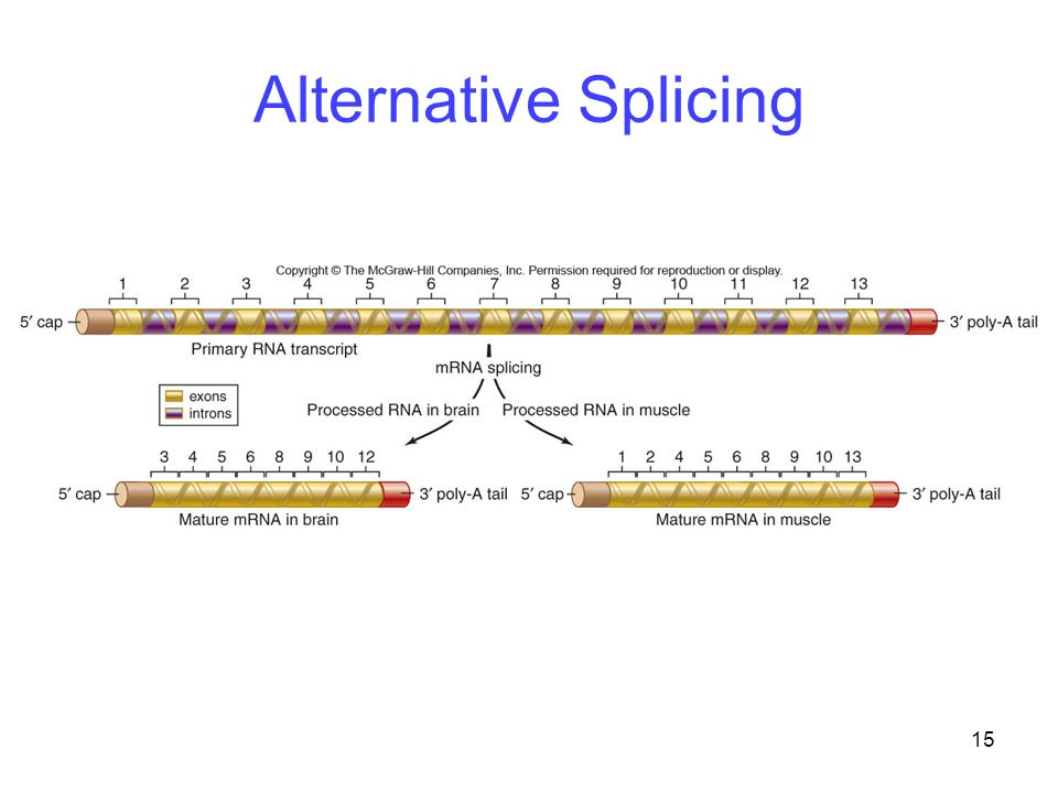 15 Alternative Splicing