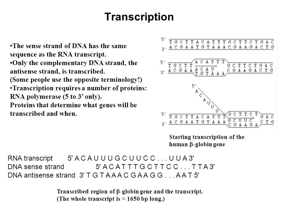 This presentation was originally prepared by c william birky jr 7 transcription malvernweather Choice Image