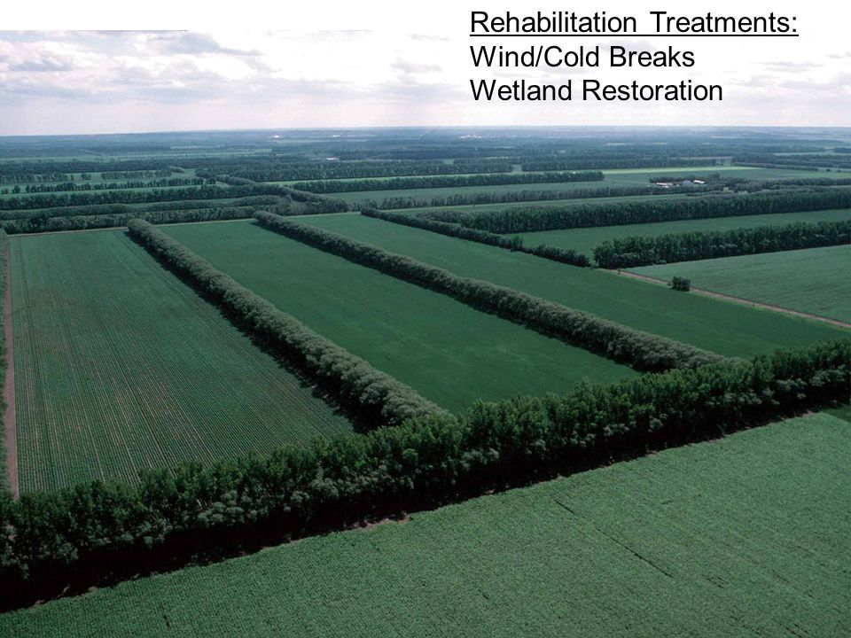 Rehabilitation Treatments: Wind/Cold Breaks Wetland Restoration