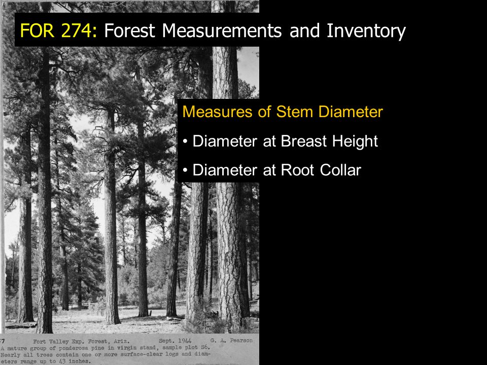 FOR 274: Forest Measurements and Inventory Measures of Stem Diameter Diameter at Breast Height Diameter at Root Collar