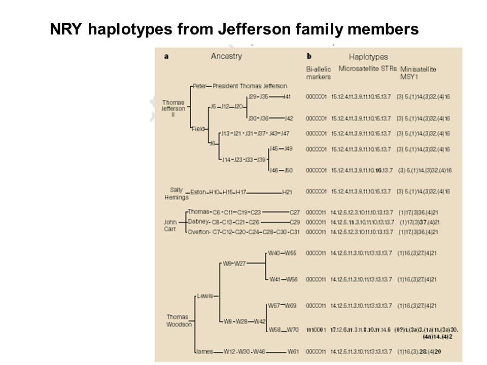 NRY haplotypes from Jefferson family members