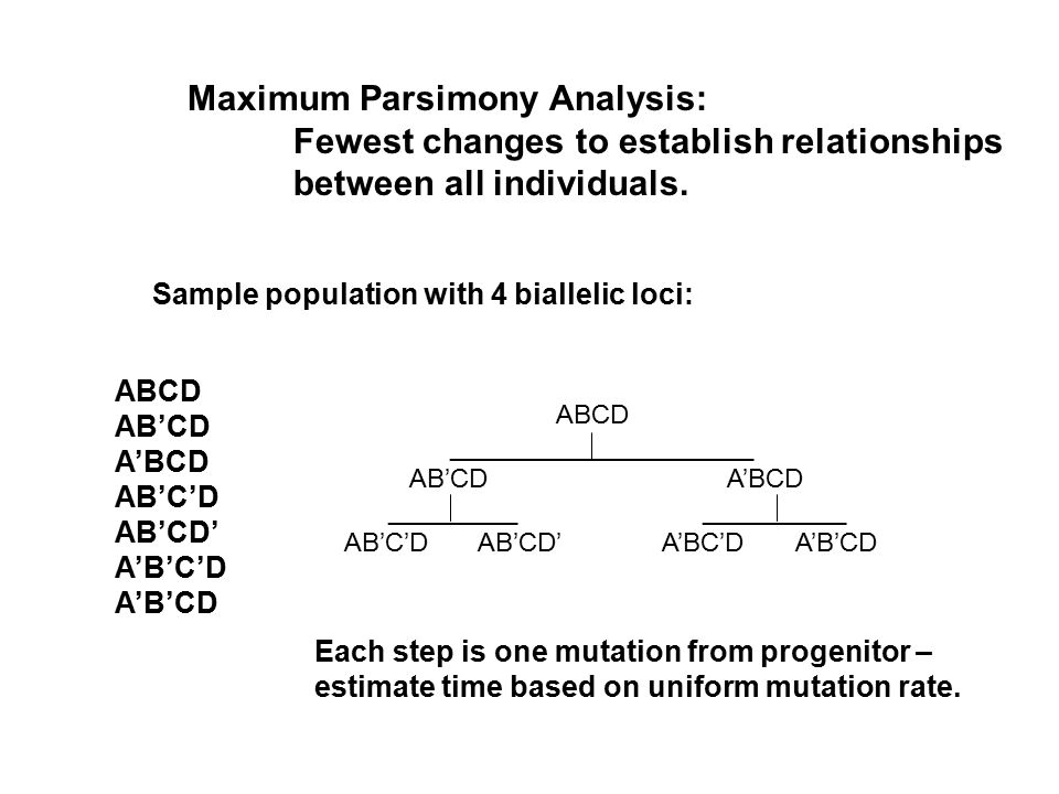 Maximum Parsimony Analysis: Fewest changes to establish relationships between all individuals.