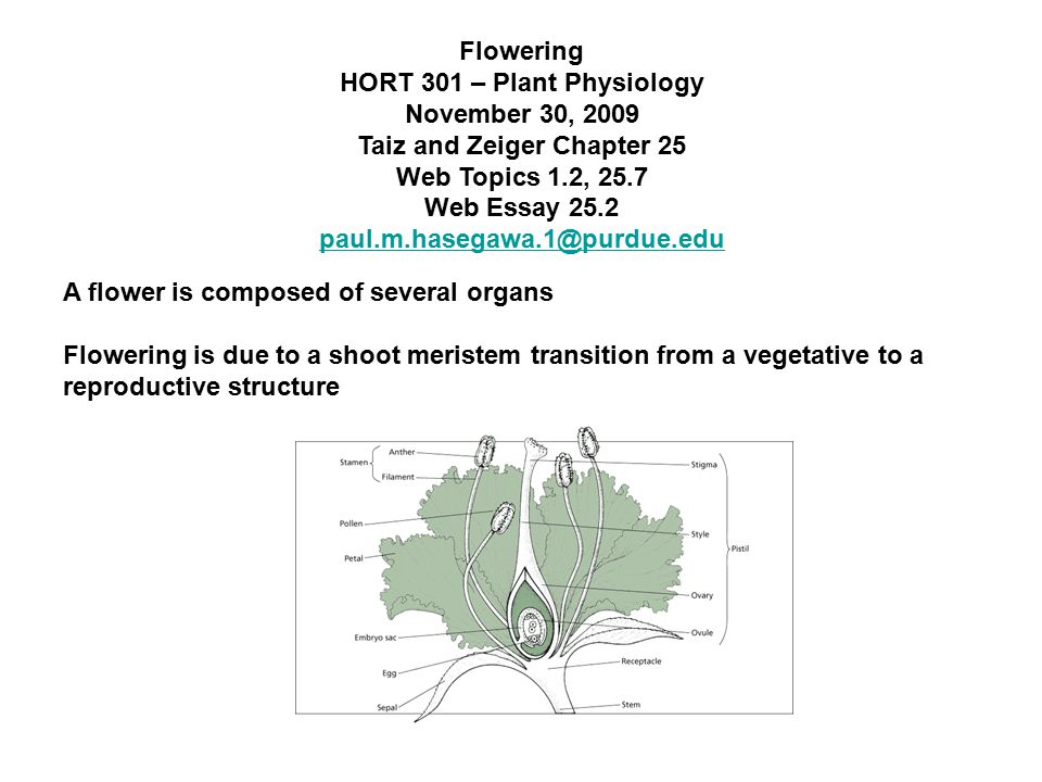 flowering hort plant physiology taiz and  1 flowering hort 301 plant