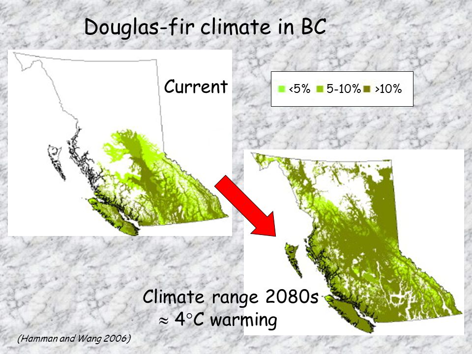 Douglas-fir climate in BC Current Climate range 2080s  4  C warming (Hamman and Wang 2006) 10%
