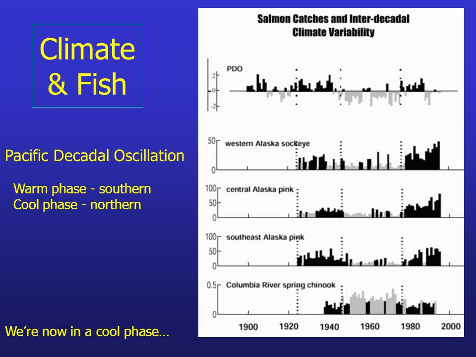 Climate & Fish Pacific Decadal Oscillation Warm phase - southern Cool phase - northern We're now in a cool phase…
