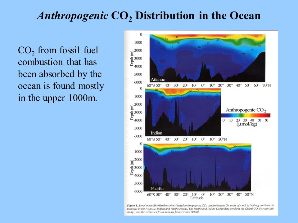 7 Anthropogenic CO 2 Distribution in the Ocean CO 2 from fossil fuel combustion that has been absorbed by the ocean is found mostly in the upper 1000m.