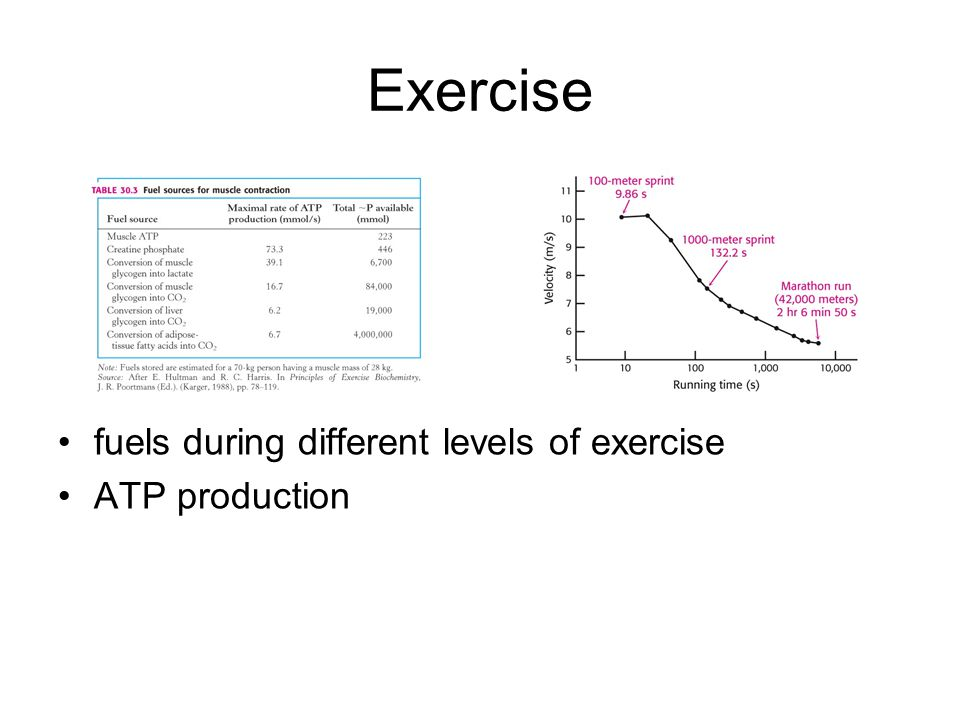 Exercise fuels during different levels of exercise ATP production