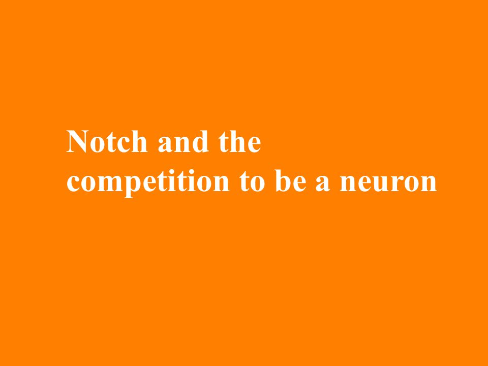 Notch and the competition to be a neuron