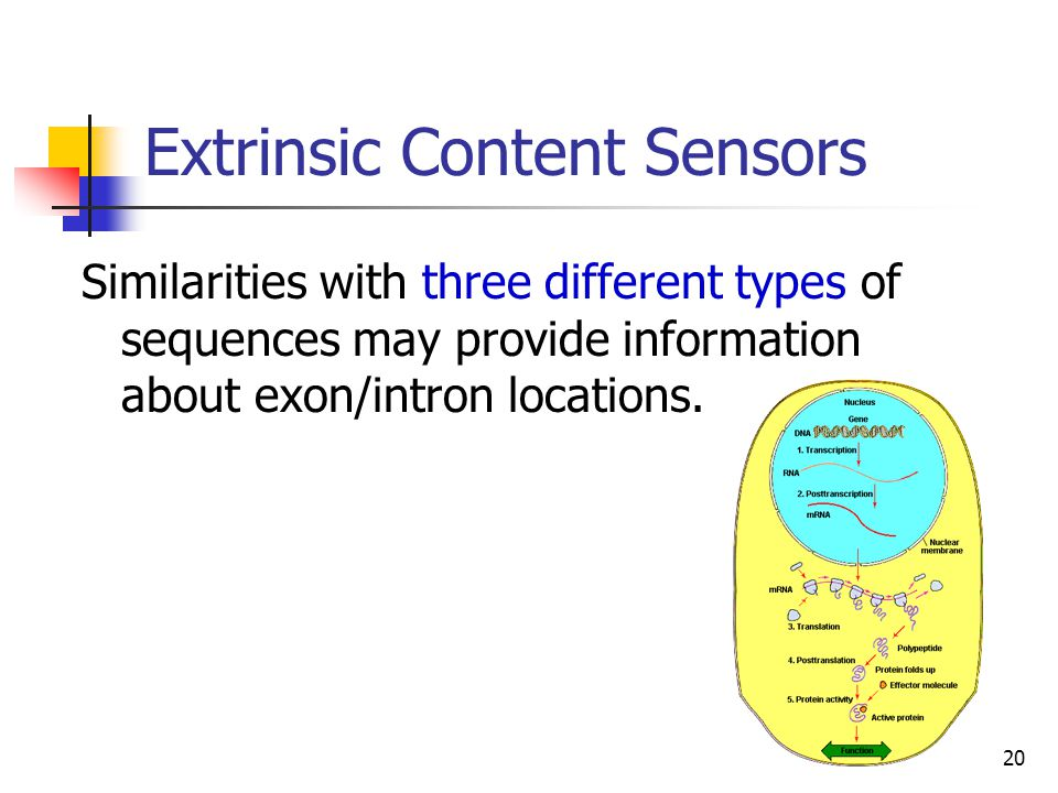 20 Extrinsic Content Sensors Similarities with three different types of sequences may provide information about exon/intron locations.