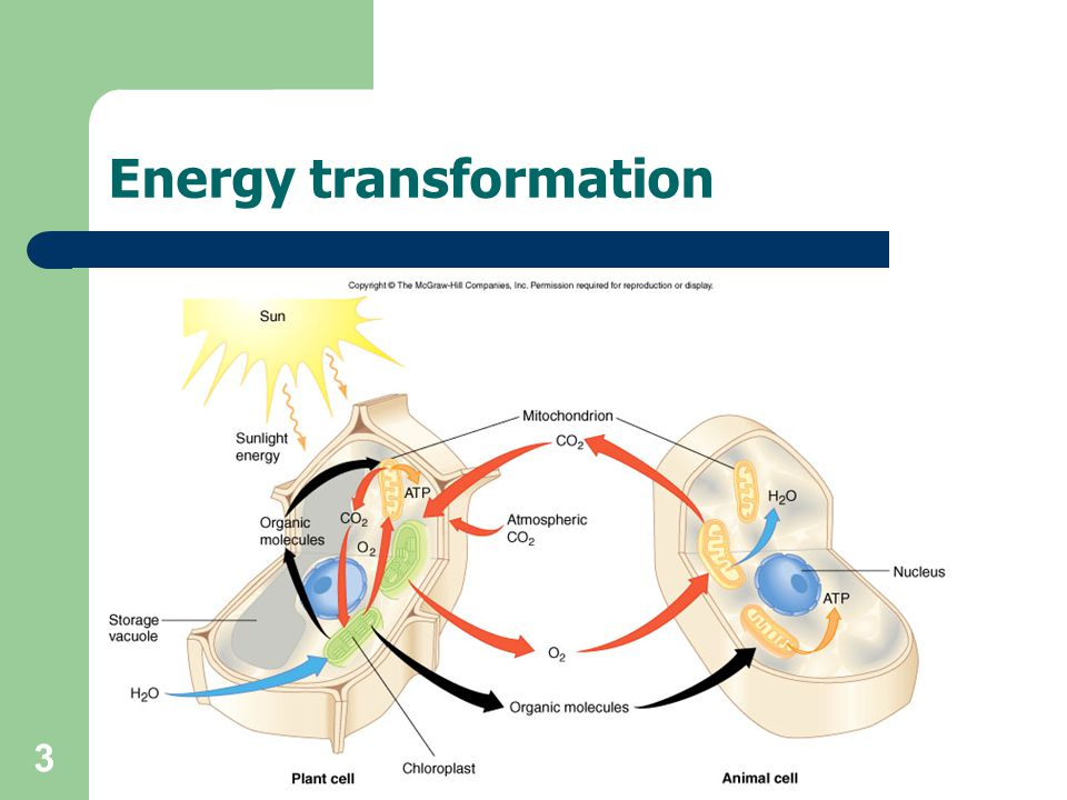 3 Energy transformation