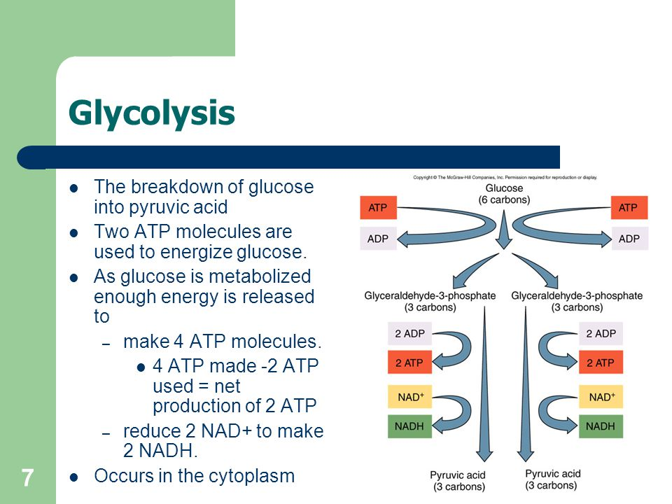 7 Glycolysis The breakdown of glucose into pyruvic acid Two ATP molecules are used to energize glucose.