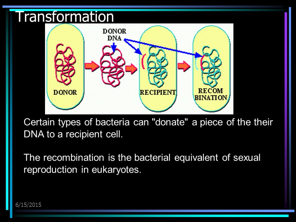 6/15/2015 Transformation Certain types of bacteria can donate a piece of the their DNA to a recipient cell.