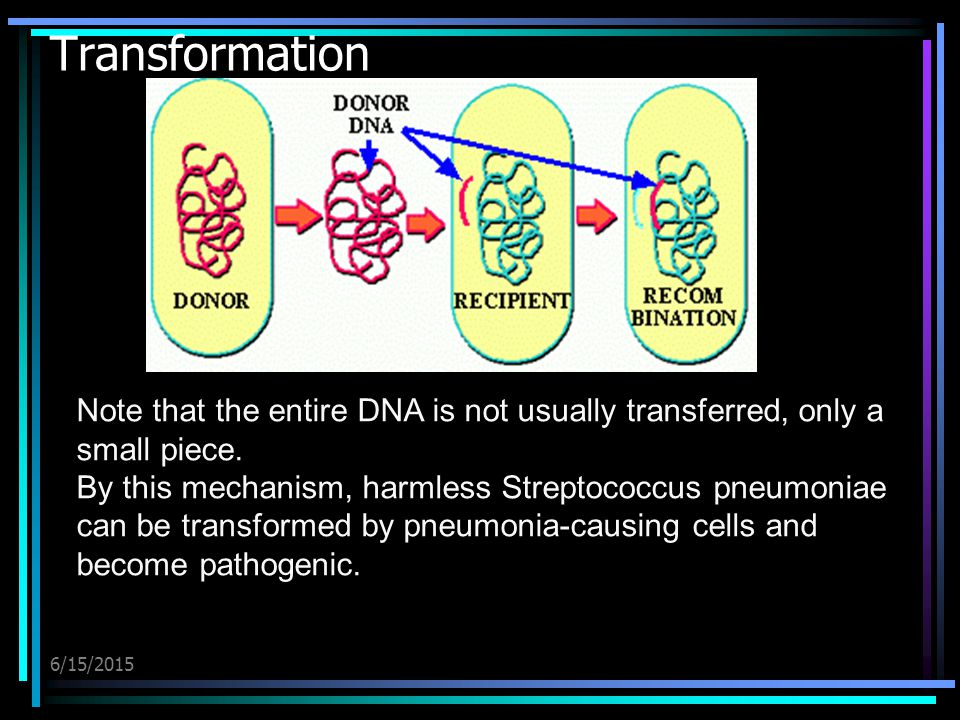 6/15/2015 Transformation Note that the entire DNA is not usually transferred, only a small piece.