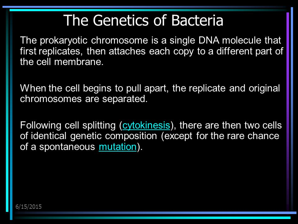 6/15/2015 The Genetics of Bacteria The prokaryotic chromosome is a single DNA molecule that first replicates, then attaches each copy to a different part of the cell membrane.