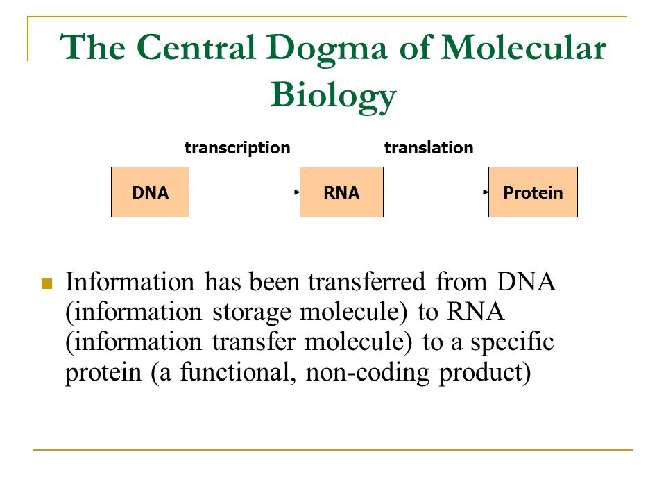 The Central Dogma of Molecular Biology Information has been transferred from DNA (information storage molecule) to RNA (information transfer molecule) to a specific protein (a functional, non-coding product) DNARNAProtein transcriptiontranslation