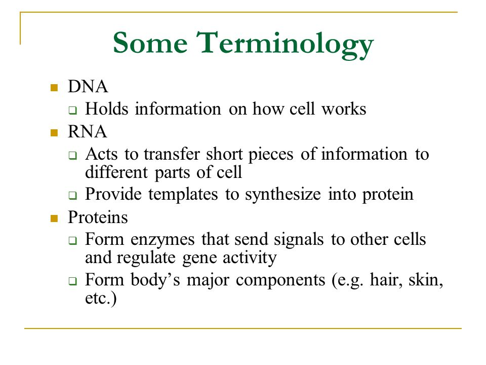 Some Terminology DNA  Holds information on how cell works RNA  Acts to transfer short pieces of information to different parts of cell  Provide templates to synthesize into protein Proteins  Form enzymes that send signals to other cells and regulate gene activity  Form body's major components (e.g.