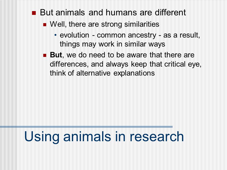 Using animals in research But animals and humans are different Well, there are strong similarities evolution - common ancestry - as a result, things may work in similar ways But, we do need to be aware that there are differences, and always keep that critical eye, think of alternative explanations