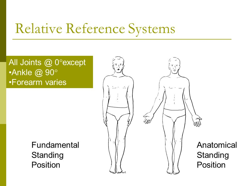 Relative Positions Anatomy 4275454 Follow4morefo