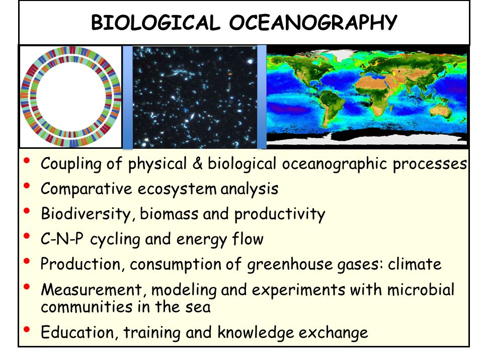 Coupling of physical & biological oceanographic processes Comparative ecosystem analysis Biodiversity, biomass and productivity C-N-P cycling and energy flow Production, consumption of greenhouse gases: climate Measurement, modeling and experiments with microbial communities in the sea Education, training and knowledge exchange BIOLOGICAL OCEANOGRAPHY