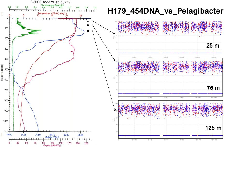 H179_454DNA_vs_Pelagibacter * * * 25 m 75 m 125 m