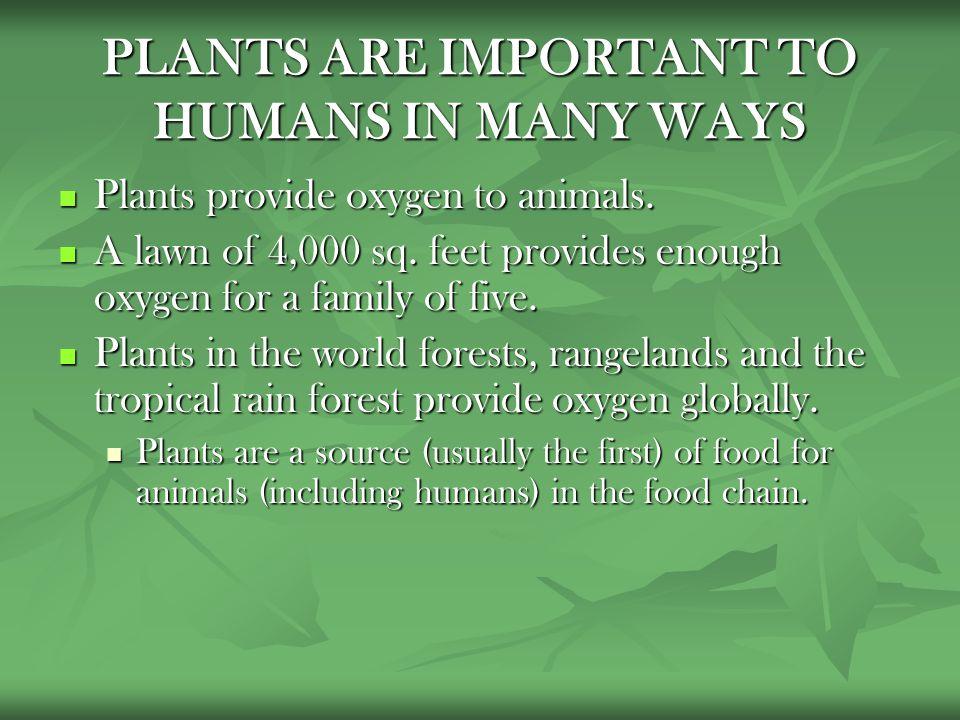 2 PLANTS ...