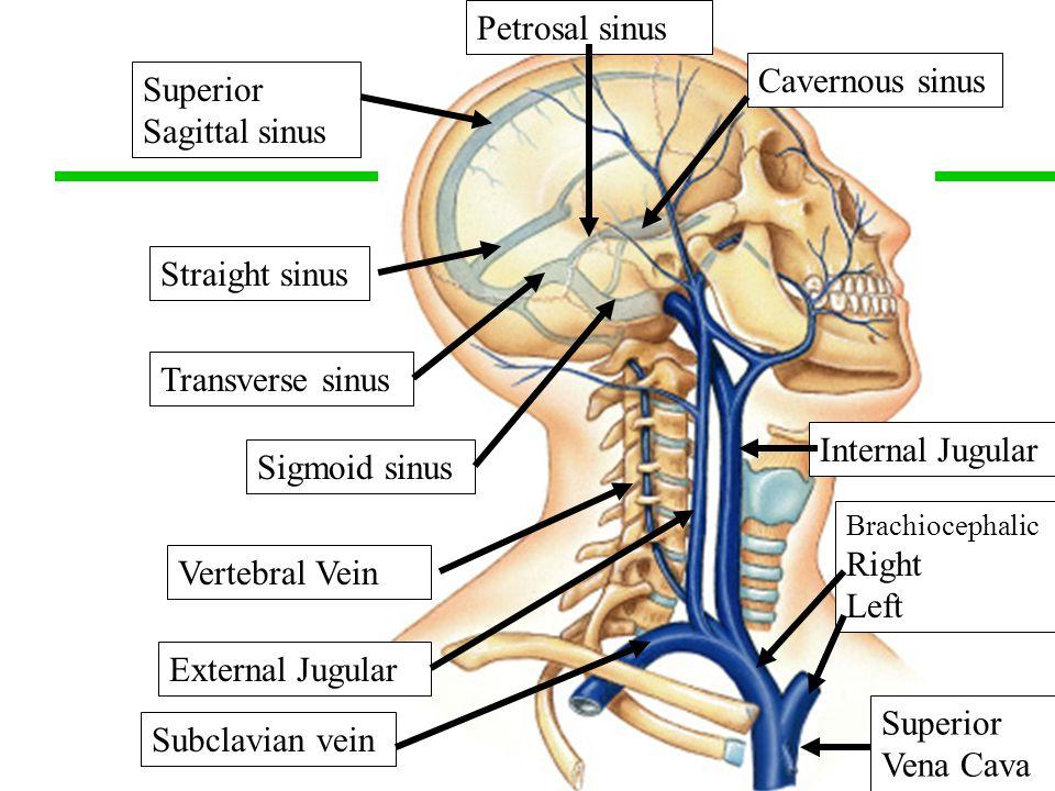 Cavernous sinus sagittal