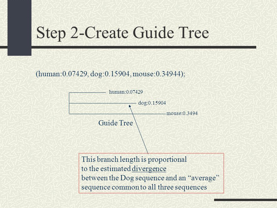 Step 2-Create Guide Tree This branch length is proportional to the estimated divergence between the Dog sequence and an average sequence common to all three sequences (human: , dog: , mouse: ); Guide Tree human: dog: mouse:0.3494