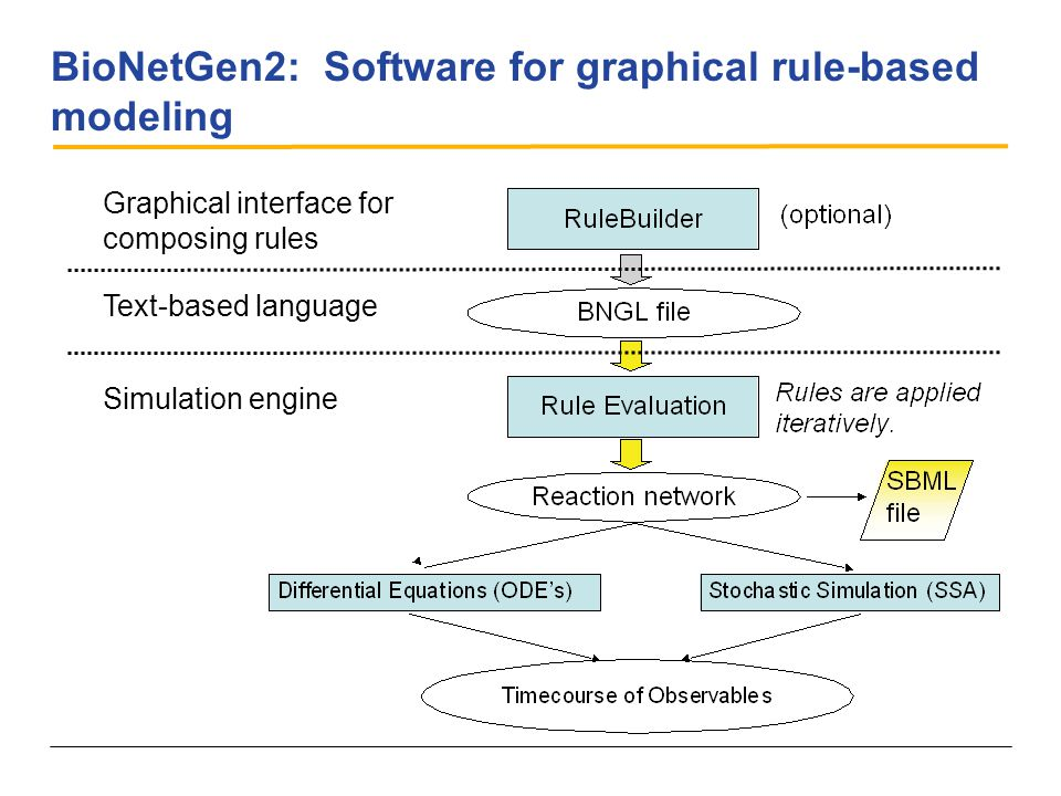 BioNetGen2: Software for graphical rule-based modeling Graphical interface for composing rules Text-based language Simulation engine