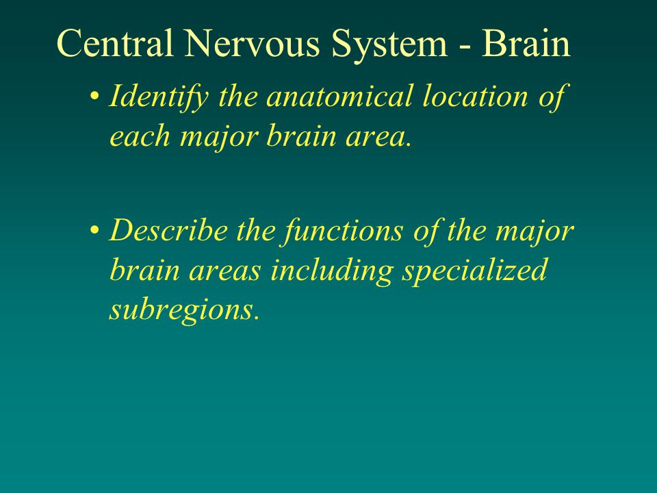 Central Nervous System - Brain Identify the anatomical location of each major brain area.