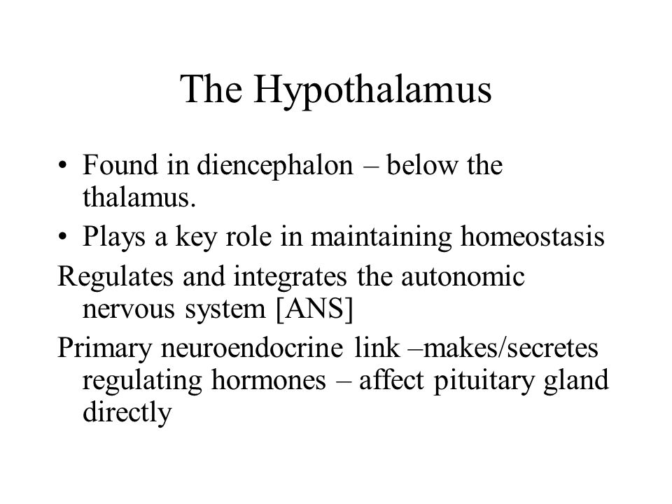 The Hypothalamus Found in diencephalon – below the thalamus.