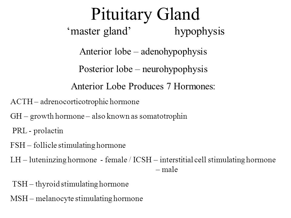 Pituitary Gland 'master gland' hypophysis Anterior lobe – adenohypophysis Posterior lobe – neurohypophysis Anterior Lobe Produces 7 Hormones: ACTH – adrenocorticotrophic hormone GH – growth hormone – also known as somatotrophin PRL - prolactin FSH – follicle stimulating hormone LH – luteninzing hormone - female / ICSH – interstitial cell stimulating hormone – male TSH – thyroid stimulating hormone MSH – melanocyte stimulating hormone
