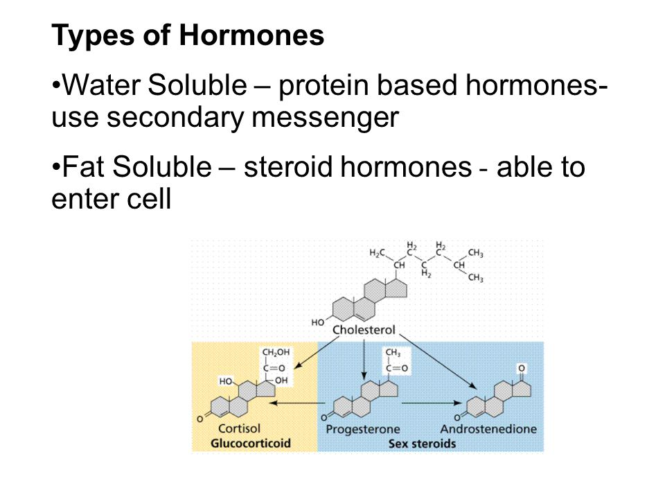 Types of Hormones Water Soluble – protein based hormones- use secondary messenger Fat Soluble – steroid hormones - able to enter cell