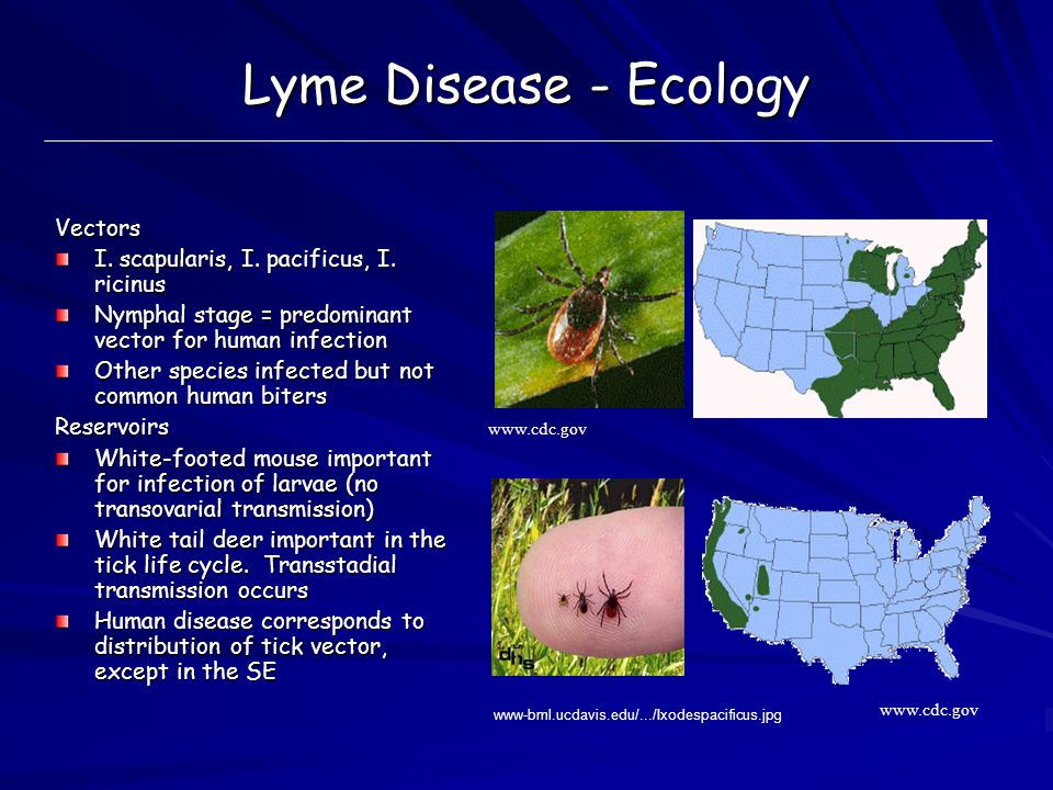 epidemiology of lyme disease The epidemiology of lyme disease lyme disease is a significant public health concern in the united states despite a growing knowledge of the disease, the incidence of lyme disease continues to increase (corapi, white, phillips, daltroy, shadick, & liang, 2007.