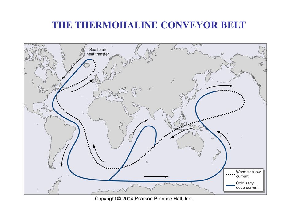 THE THERMOHALINE CONVEYOR BELT