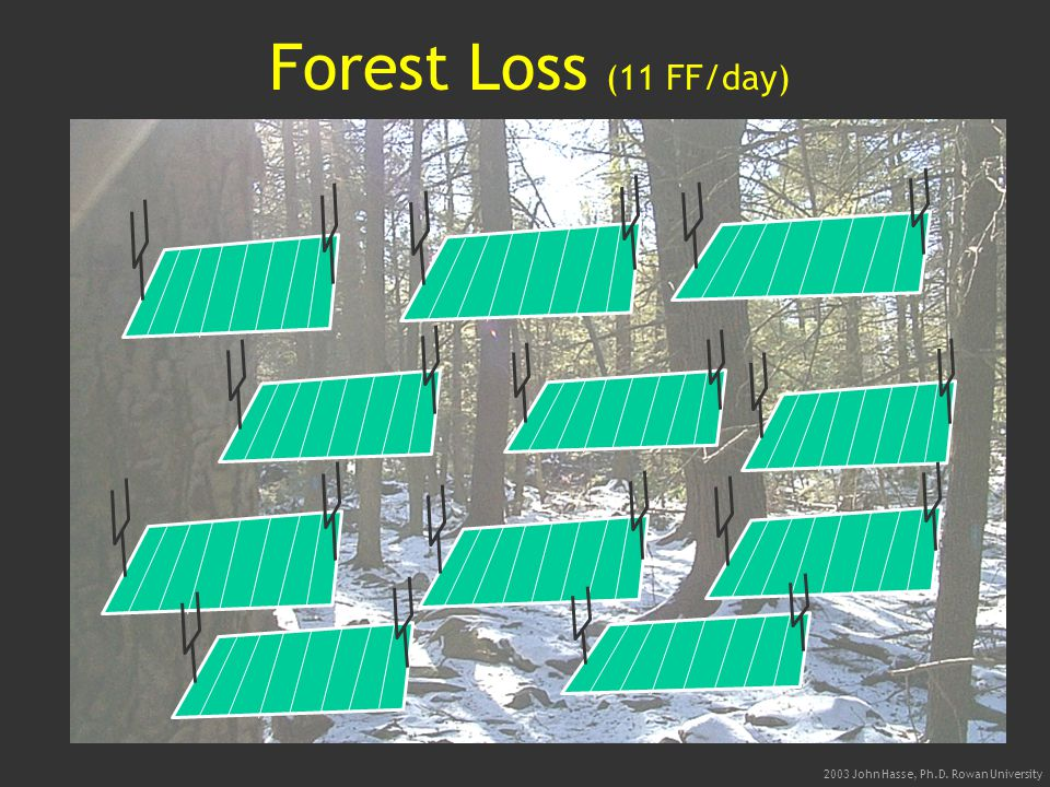 2003 John Hasse, Ph.D. Rowan University Forest Loss (11 FF/day)