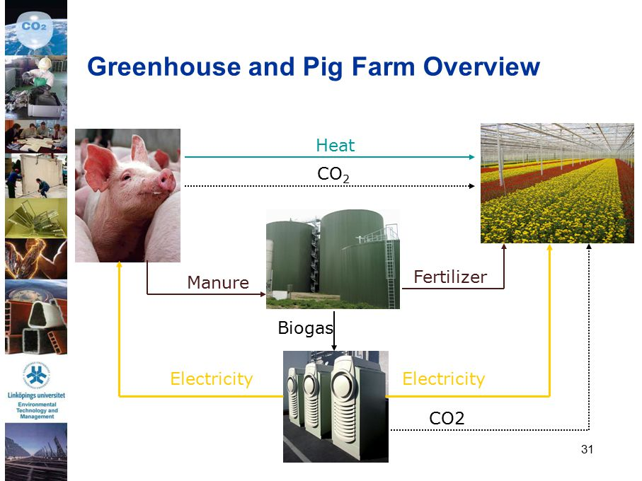 31 CO 2 Heat Biogas Manure Fertilizer Electricity CO2 Greenhouse and Pig Farm Overview
