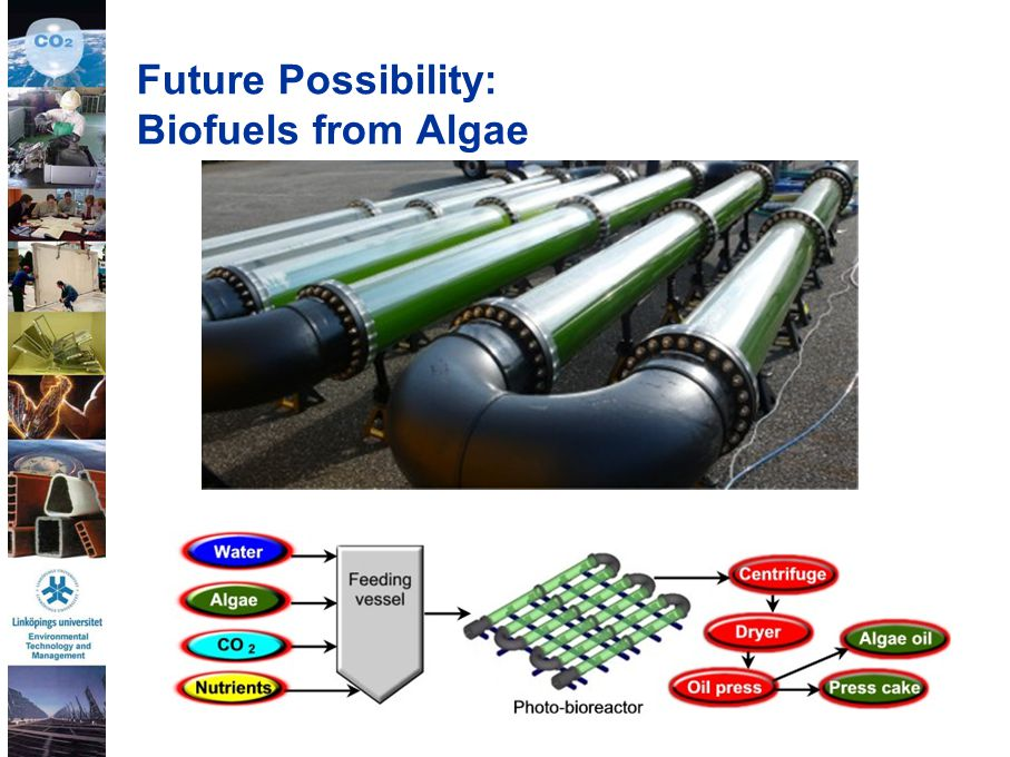 32 Future Possibility: Biofuels from Algae
