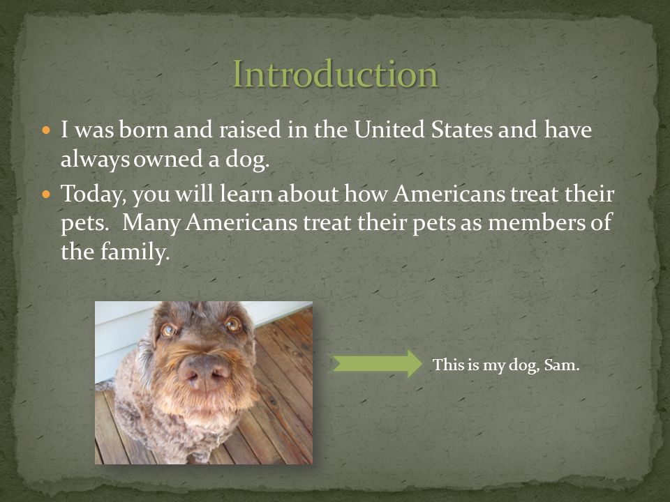 I was born and raised in the United States and have always owned a dog.