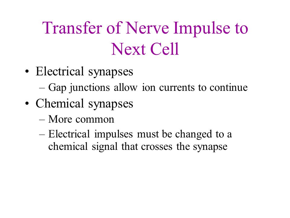Transfer of Nerve Impulse to Next Cell Electrical synapses –Gap junctions allow ion currents to continue Chemical synapses –More common –Electrical impulses must be changed to a chemical signal that crosses the synapse