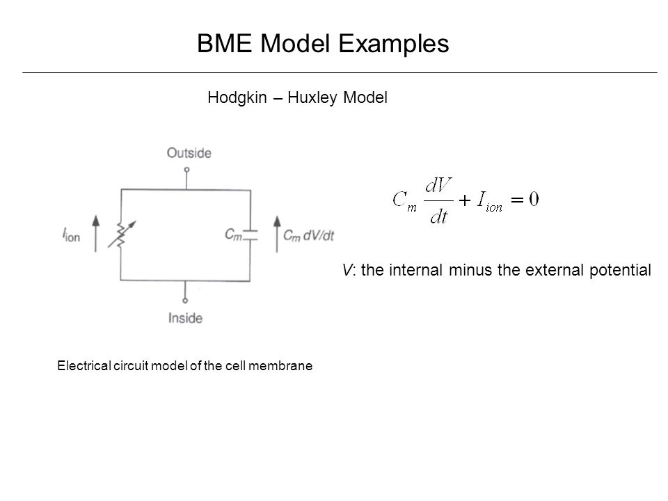 BME Model Examples Hodgkin – Huxley Model Electrical circuit model of the cell membrane V: the internal minus the external potential