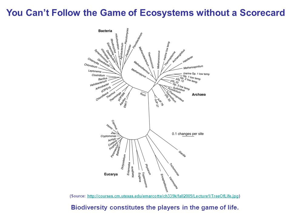 (Source:   Biodiversity constitutes the players in the game of life.