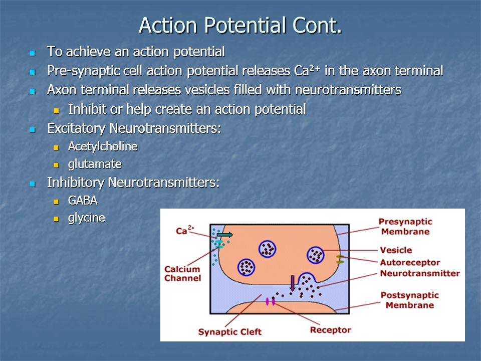 Action Potential Cont.