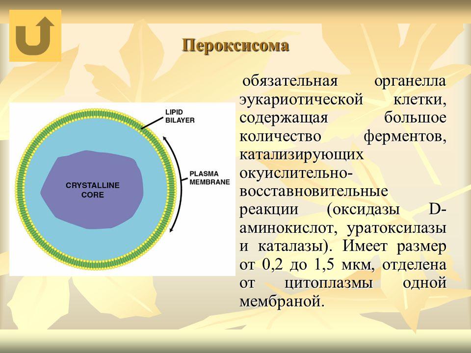 Пероксисома