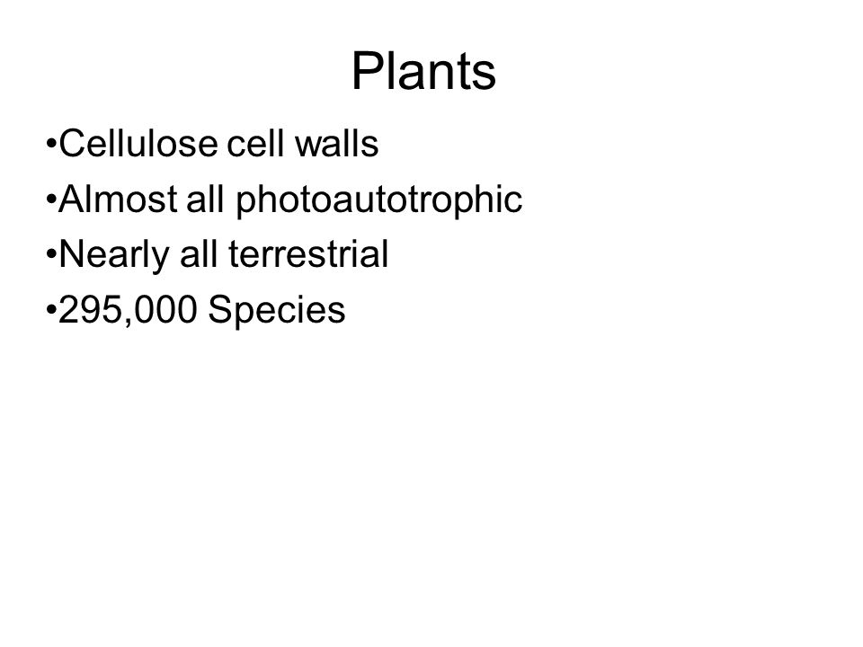 Plants Cellulose cell walls Almost all photoautotrophic Nearly all terrestrial 295,000 Species