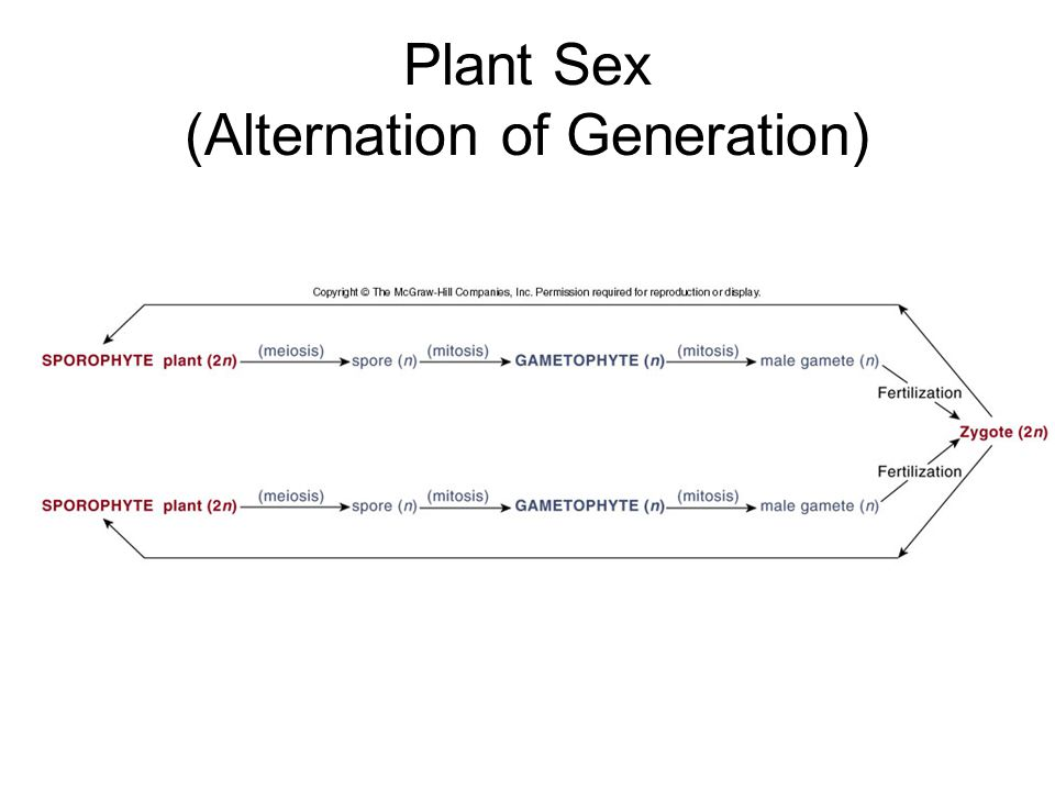 Plant Sex (Alternation of Generation)