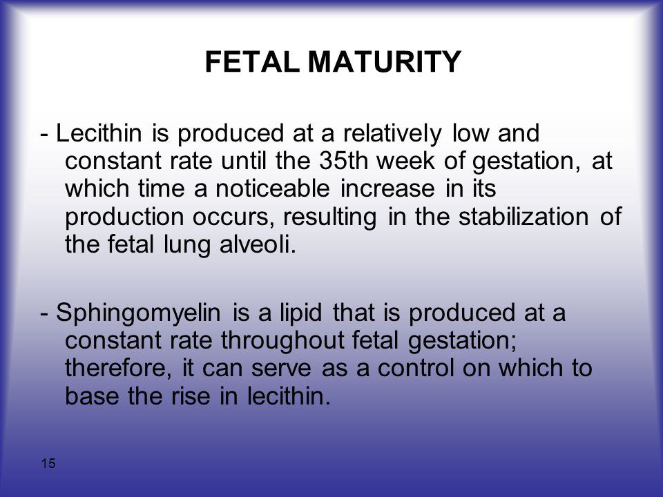 15 FETAL MATURITY - Lecithin is produced at a relatively low and constant rate until the 35th week of gestation, at which time a noticeable increase in its production occurs, resulting in the stabilization of the fetal lung alveoli.