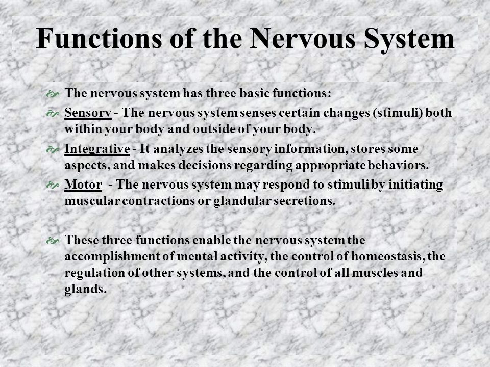 Functions of the Nervous System  The nervous system has three basic functions:  Sensory - The nervous system senses certain changes (stimuli) both within your body and outside of your body.